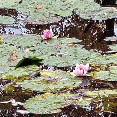 Springtime in Monet's Gardens
